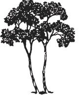 Twin Oaks Tree Logo