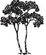 ... Memorial Gardens U0026 Funeral Home. Twin Oaks Tree Logo