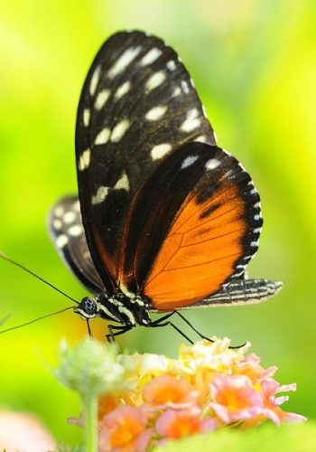 black-and-orange-butterfly-annda-bell